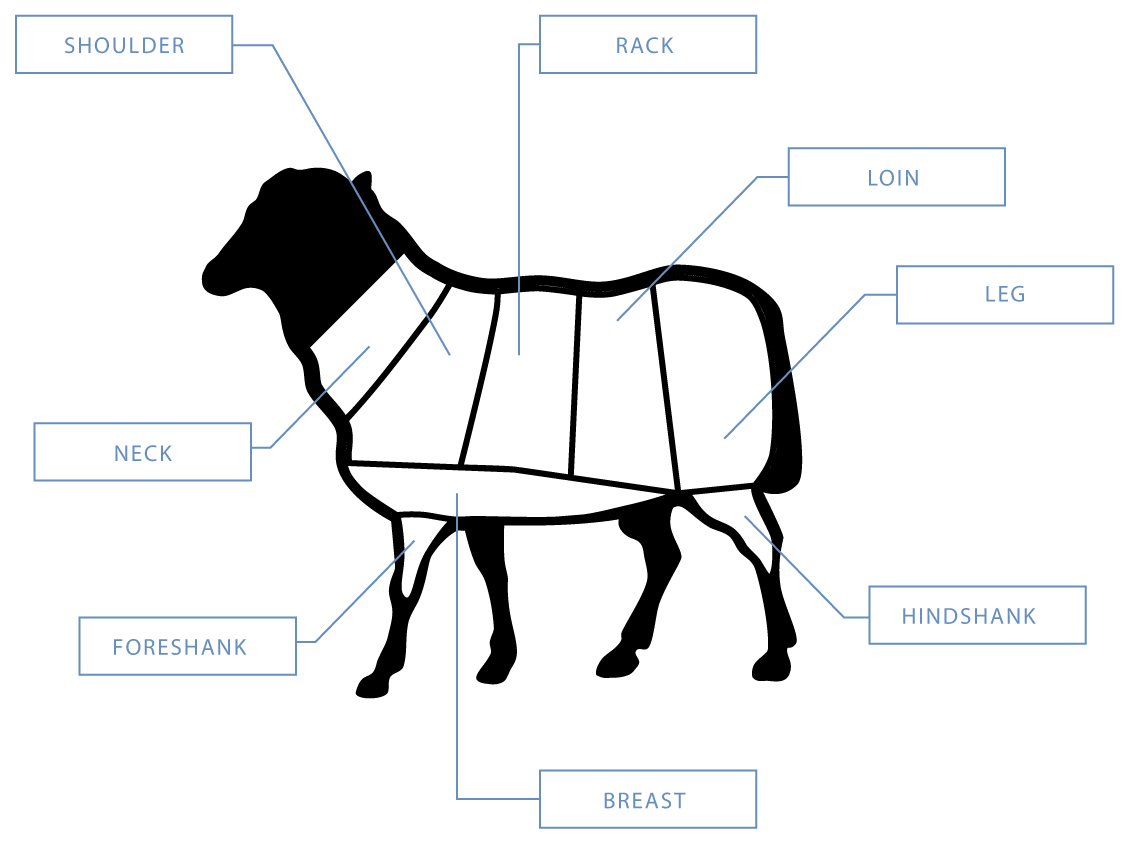 Lamb Shank Diagram on from a pig cuts of meat